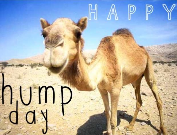 77215-Happy-Hump-Day